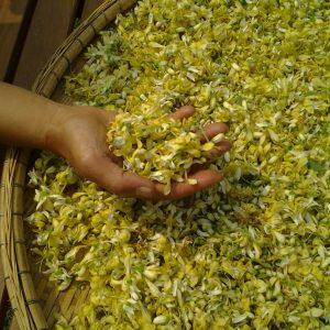 Moringa Blüte